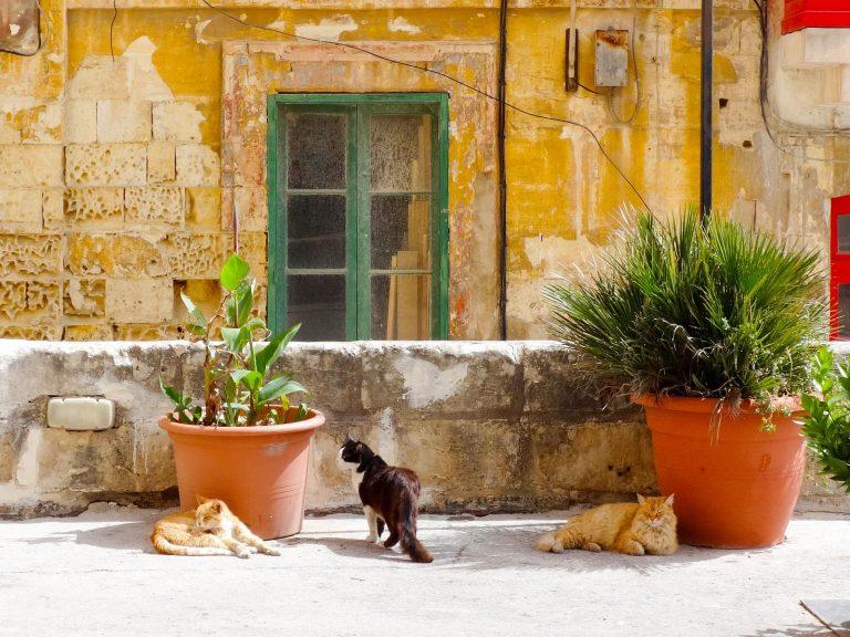 (人口よりも多い)猫 Cats