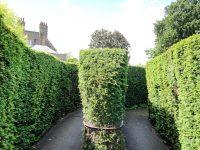 (美しい生垣の迷宮)ハンプトン・コート迷宮 Hampton Court Maze