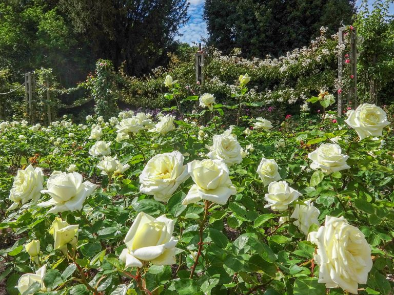 (花が咲き誇る)クィーン・メアリー・ガーデン Queen Mary's Gardens